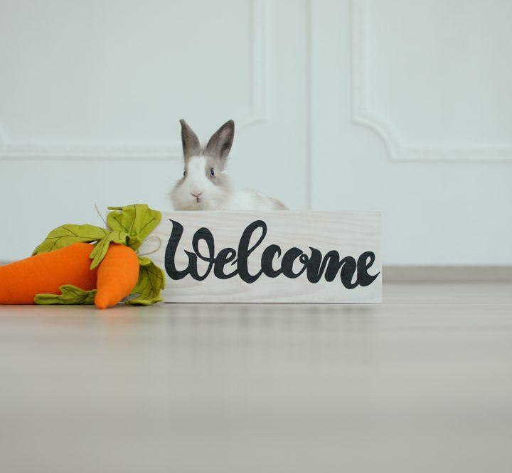 Наша маленька мешканка - Морквинка :)